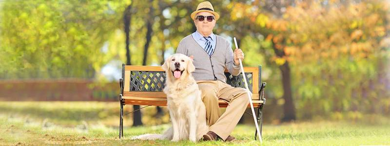 old man wearing sunglasses sitting on bench with seeing-eye dog 800X300